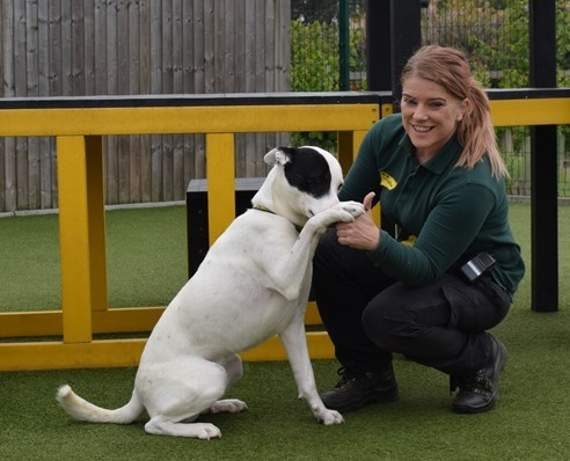 Dogs Trust Basildon seeks home for deaf dog who has learned to obey hand signals